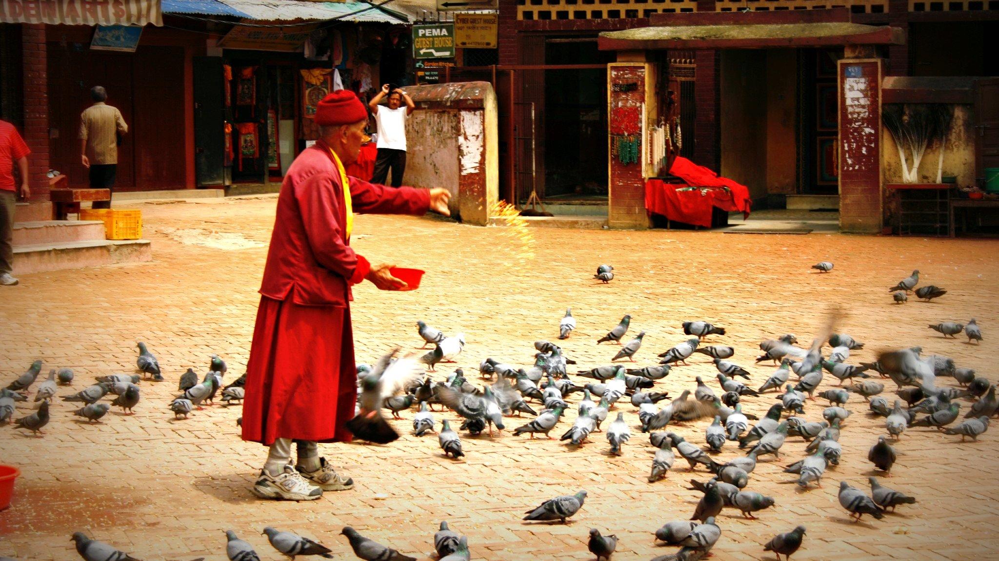 monnik voert de vogels